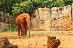 Le grand vieil éléphant au zoo Photo libre de droits