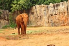 Le grand vieil éléphant au zoo Photos stock
