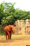 Le grand vieil éléphant au zoo Images libres de droits