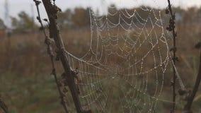 Le grand Web dans les baisses de la rosée tremble sur un vent clips vidéos