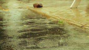 Le grandi gocce di pioggia cadono sulla strada asfaltata innaffiata archivi video