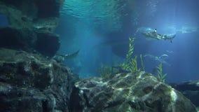 Le grandi rocce ad una profondità subacquea e gli squali nuotano vicino video d archivio