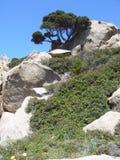 Le granit bascule avec la végétation méditerranéenne, Testa de capo, Santa Teresa Gallura, Italie photographie stock libre de droits
