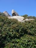Le granit bascule avec la végétation méditerranéenne, Testa de capo, Santa Teresa Gallura, Italie photos libres de droits