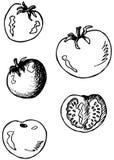 Le griffonnage de tomates, l'un d'entre eux a coupé Images libres de droits