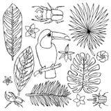 Le griffonnage tiré par la main a placé avec le toucan et les éléments tropicaux Image libre de droits