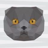 Le gris géométrique polygonal abstrait de triangle a coloré le fond britannique de portrait de chat Photo libre de droits