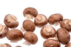 Le gris répand des champignons de paris d'isolement sur le fond blanc Images stock