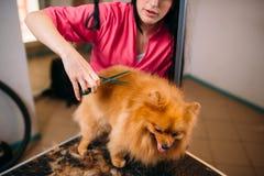 Le groomer d'animal familier fait le chien de toilettage Images libres de droits
