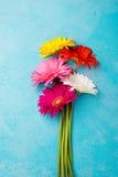 Le groupe coloré de gerbera fleurit sur le fond de pierre bleue Vue supérieure Copiez l'espace Photos libres de droits