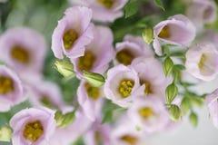 Le groupe d'eustoma lilas fleurit dans le vase en verre Fond de vintage d'amour avec des fleurs Papiers peints pour le téléphone Images libres de droits