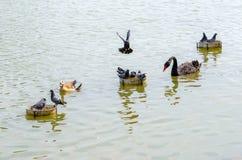 Le groupe d'oiseaux photos stock