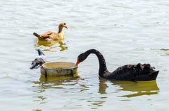 Le groupe d'oiseaux photographie stock libre de droits