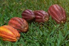 Le groupe de cosses de cacao s'étendent sur l'herbe verte Photos libres de droits