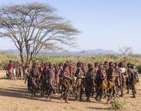Le groupe de femmes de Hamar dansent à la cérémonie sautante de taureau Turmi, vallée d'Omo, Ethiopie Photos libres de droits