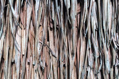 Le groupe de feuilles sèches a relié ensemble la texture de fond ou l'a employé comme toit naturel de conception de vintage ou mu Photo libre de droits