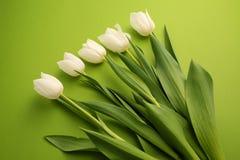 Le groupe de fleurs blanches fraîches de tulipe se ferment vers le haut de la composition sur le fond vert Photo libre de droits