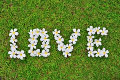 Le groupe de fleurs de Plumeria s'étendent dans des lettres d'amour sur le fond d'herbe Photographie stock
