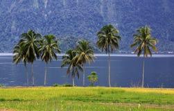 Le groupe de palmiers s'approchent du lac photographie stock