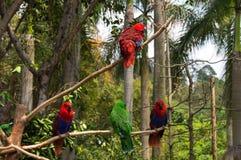 Le groupe de perroquets lumineux Images libres de droits