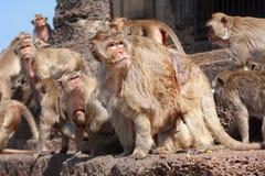 Le groupe de singe regardent quelque chose Image libre de droits
