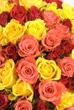 Le groupe de texture de roses Photographie stock