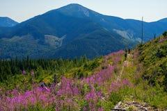 Le groupe de voyageurs marche le long de la route de montagne Photographie stock