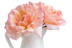 Le groupe frais de roses roses fleurit dans le pot D'isolement sur le blanc Images stock