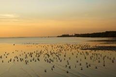 Le groupe rétro-éclairé d'oiseaux se tiennent sur la surface de l'eau Image libre de droits