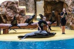Le guarnizioni ed il leone marino mostrano al parco di Loro, Puerto de la Cruz fotografia stock libera da diritti