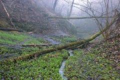 le guarnizioni piantano sugli alberi vicino al percorso rurale fotografie stock