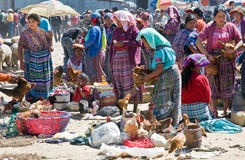 Le Guatemala - poultrymarket Photographie stock