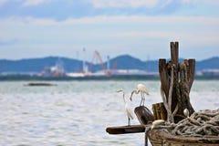 Le héron attend la proie dans le vieux bateau de pêche au bord de la mer, nature Photographie stock