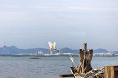 Le héron attend la proie dans le vieux bateau de pêche au bord de la mer, nature Image libre de droits