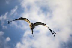 Le héron monte sous le ciel bleu de matin image stock