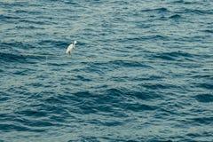 Le héron se tient sur un ancrage au milieu de la mer image stock