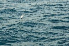 Le héron se tient sur un ancrage au milieu de la mer images stock