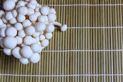 Le hêtre blanc répand (Bunapi Shimeji) Images libres de droits