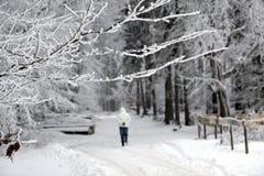 Le hêtre part avec la neige et les baisses de la rosée Image libre de droits