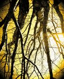 Le halo de la nature Photographie stock libre de droits