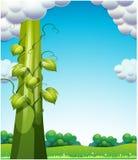 Le haricot géant illustration stock