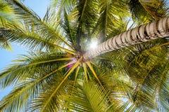 Le Hawai immagini stock libere da diritti