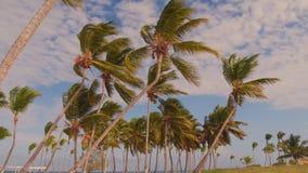 Le Hawai Fotografia Stock