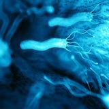 Le helicobacter - fin  illustration libre de droits