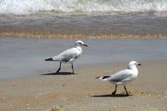 Le helsi de ¡ de la plage Ð mouettes photographie stock