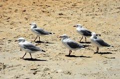 Le helsi de ¡ de la plage Ð mouettes photos stock