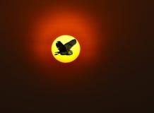 Le hibou a volé Photographie stock libre de droits