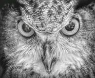 Le hibou vous observe Photo stock