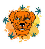 Le hunden med ett blad Arkivbild