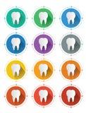 Le icone piane moderne del dente di progettazione hanno messo con effetto ombra lungo Fotografie Stock